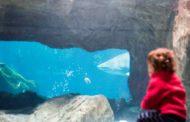 El acuario de Gijón en familia