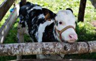 Visita en familia a la granja La Senda en Caboalles de Abajo